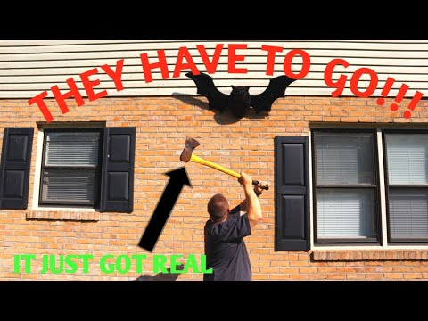 How To Get Bats Out Of An Attic Youtube