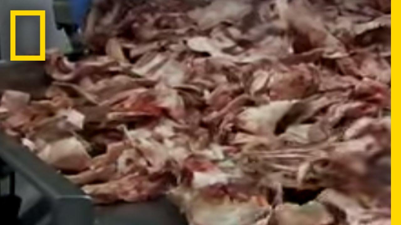 スライム 肉 ピンク