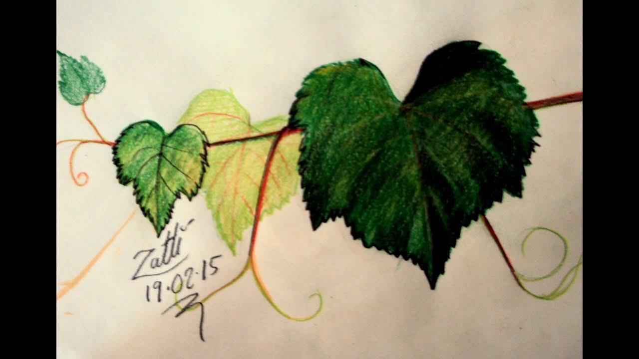como desenhar folhas de parreira youtube