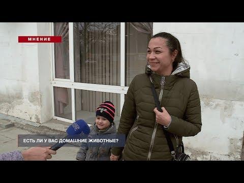 НТС Севастополь: Мнение: Есть ли у вас домашние животные?