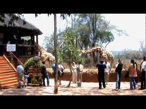 the Giraffe centre, Nairobi.