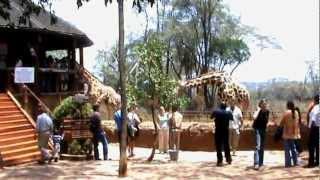 the Giraffe centre, Nairobi.