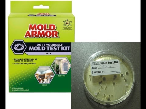 DIY Home Mold Test Kit Review