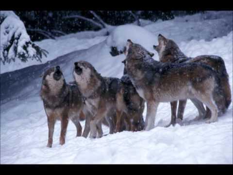 Wolf Moon Trailer
