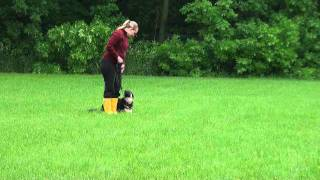 Bella (german Shepherd Puppy) Obedience Training Video