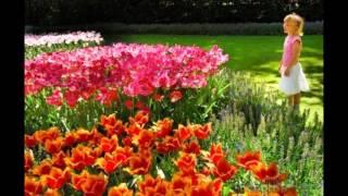LIHAT KEBUNKU penuh bunga - Lagu Anak Terbaru