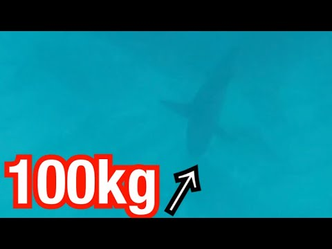 Shocking Video: Attacked by a 100kg Shark...