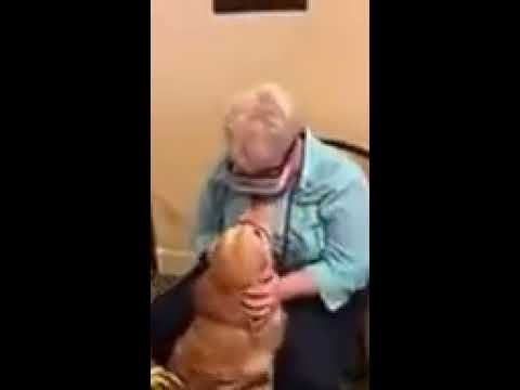 Laura - Blind woman uses special glasses to see her guide dog for the first time