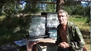 ПОБЕГ ОТ ПЧЁЛ. КАК ИЗ ПУЛЕМЁТА ПО ОКНАМ! Рассказ пчеловода