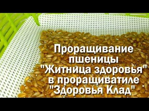 Выращивание микрозелени в проращивателе Здоровья Клад