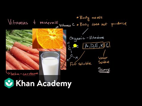 Introduction to vitamins and minerals