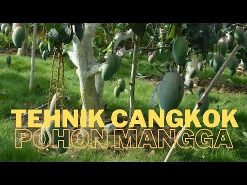 Resep Pengolahan Hasil Samping Sayuran
