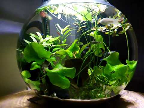 Fresh Water 20 Gallon Aquatic Plant Oasis with Fish Timelapse