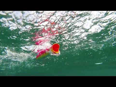 How Lures Swim: Halco Roosta Popper