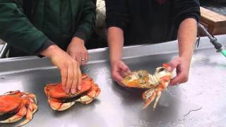 We Rent a Boat and Go Crabbing on the Oregon Coast {Oct. 23, 2014}
