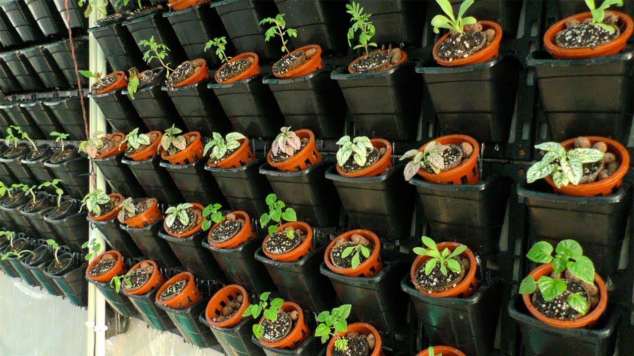 खेती बिना मिट्टी : ग़ज़ब की हाइड्रोपोनिक्स तकनीक - YouTube