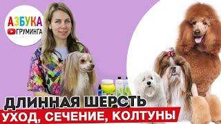 Груминг китайской хохлатой пуховки собаки с длинной шерстью уход и восстановление КХС