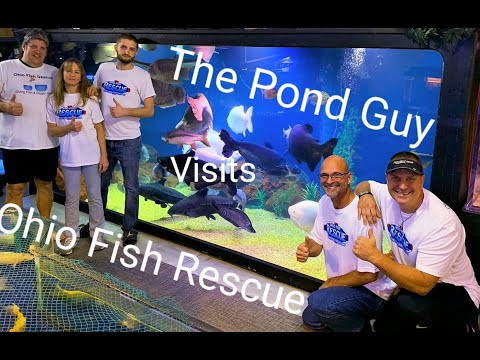 Ohio fish rescue pushed in the pool by the pond guy
