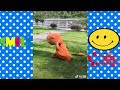 China Funny Prank Teddy bear Videos P8   Whatsapp Chinese funny videos 2018 xvid