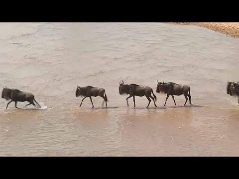 Masai Mara: Wildwanderung