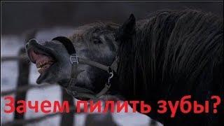 Зачем пилить зубы лошадям?