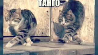 Танцуют все(кошки)