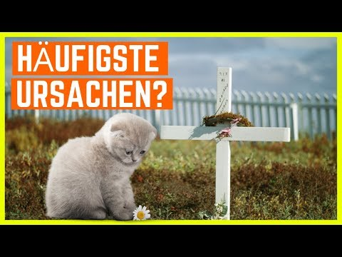 KATZE TODESURSACHEN - So Lassen Katzen Am Häufigsten Ihr Leben...