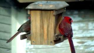 Cardinals At Bird Feeder From Kitchen Window