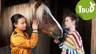 Pferdeschmerz (Folge 85) | Tiere bis unters Dach | SWR Kindernetz