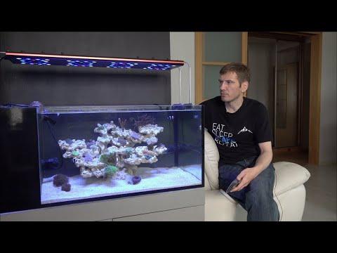 Видео: Запуск морского аквариума 5 серия.  Новый свет. Новые кораллы. Кормление