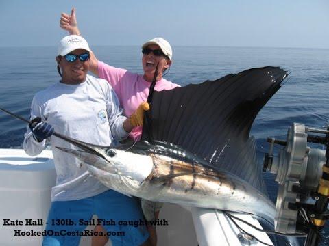 Costa Rica Fishing Sailfish Marlin Los Suenos Bait Ball