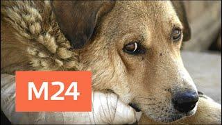 Смотреть видео Президент подписал закон о запрете жестокого обращения с животными - Москва 24 онлайн