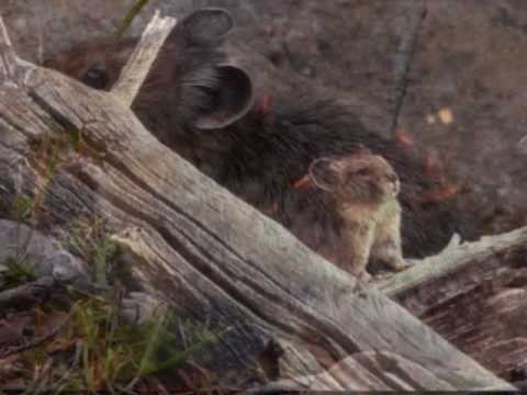 Save the North American Pika (KSU 2290)
