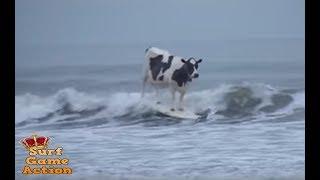 Wild Surfing Animals