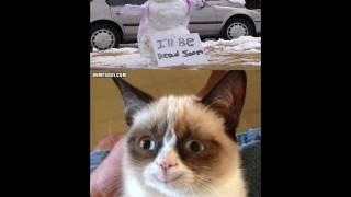 Grumpy cat memes 2017