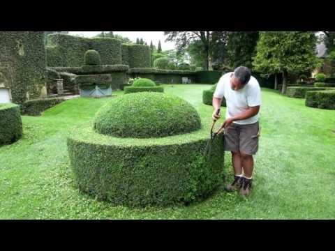 Стрижка самшита. Топиарное искусство в саду. Регулярный сад