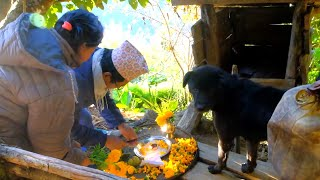 🐕 Dog Festival in the village || Tihar special