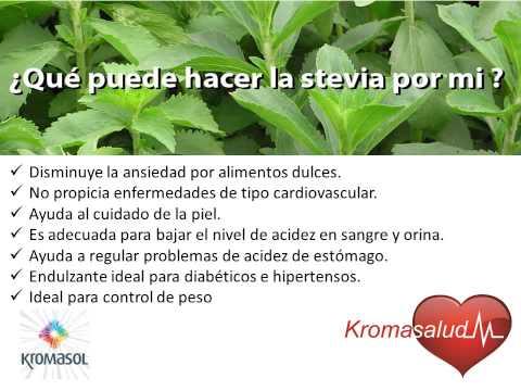 Que es la Stevia y sus Beneficios - YouTube