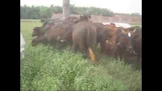 Pre-feasibility: Mukhtar Dairy Farm Call +92 (0) 300 8402812 April 18 2010 Manga Mandi Pakistan
