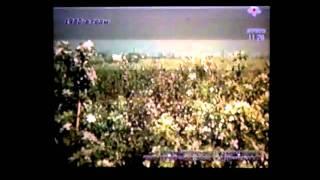 Алматы город который был зелёным(1981 год).