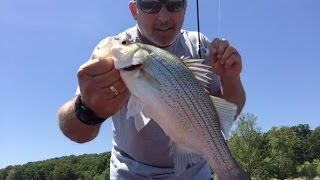 LIVE - NO EDITING - Catching White Bass at Grand Lake Oklahoma.