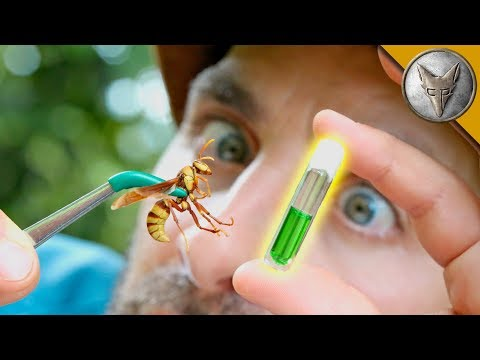 Worst Sting On EARTH?!