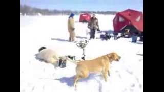 Ice Auger Rodeo