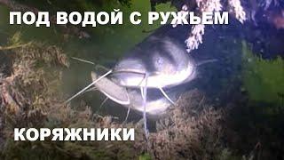 ПОД ВОДОЙ С РУЖЬЕМ КОРЯЖНИКИ Подводная охота на сома