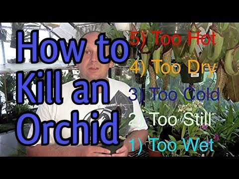 5 easy ways to kill an orchid in 5 minutes when to water orchids and so much more youtube. Black Bedroom Furniture Sets. Home Design Ideas