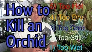 5 easy ways to kill an orchid in 5 minutes when to water orchids and so much more