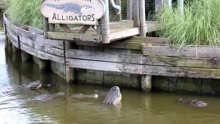 Alligator Farm, Myrtle Beach, South Carolina