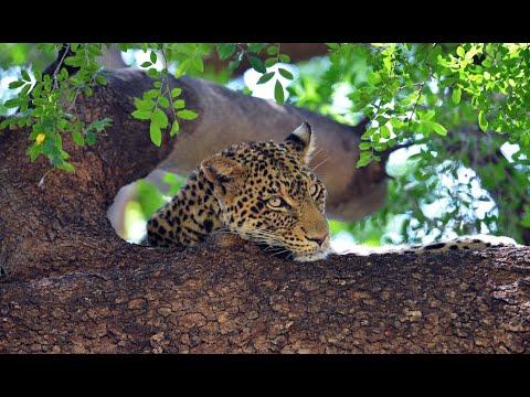 Mashatu - Land of Giants        www.natural-variation.com