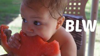 introduo alimentar   blw