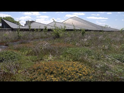 Deb's Big Backyard: Going with Green Roofs